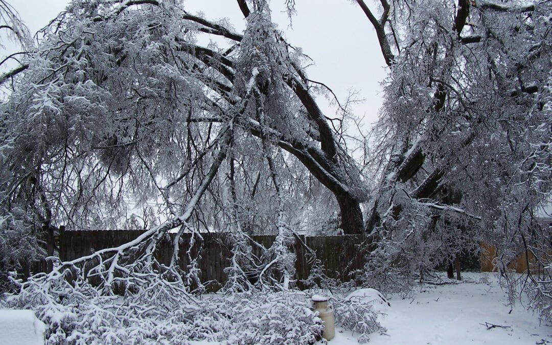 Caring for Winter Storm-Damaged Trees