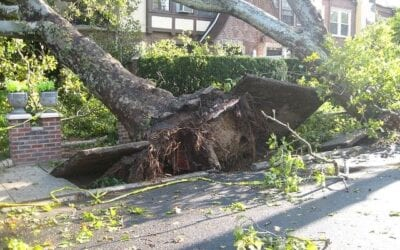 Tree that has fallen over towards a house