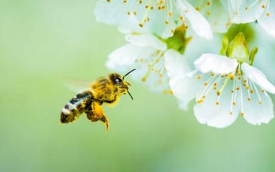 Save the Bees, Save the Trees!